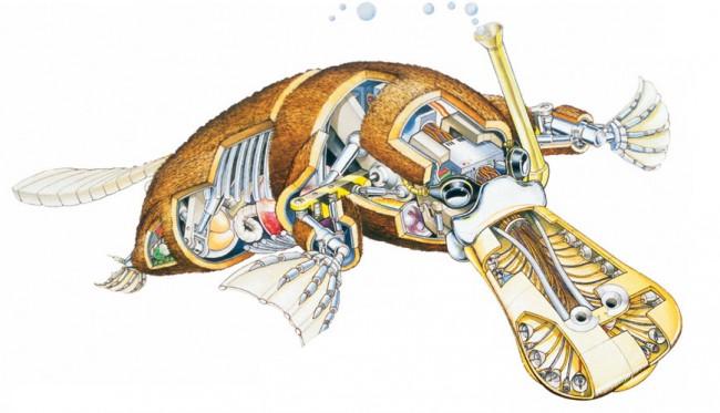 horniman-robotzoo-platypus-temp-exhibition-banner