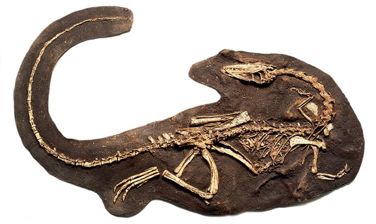 natural-history-fossils